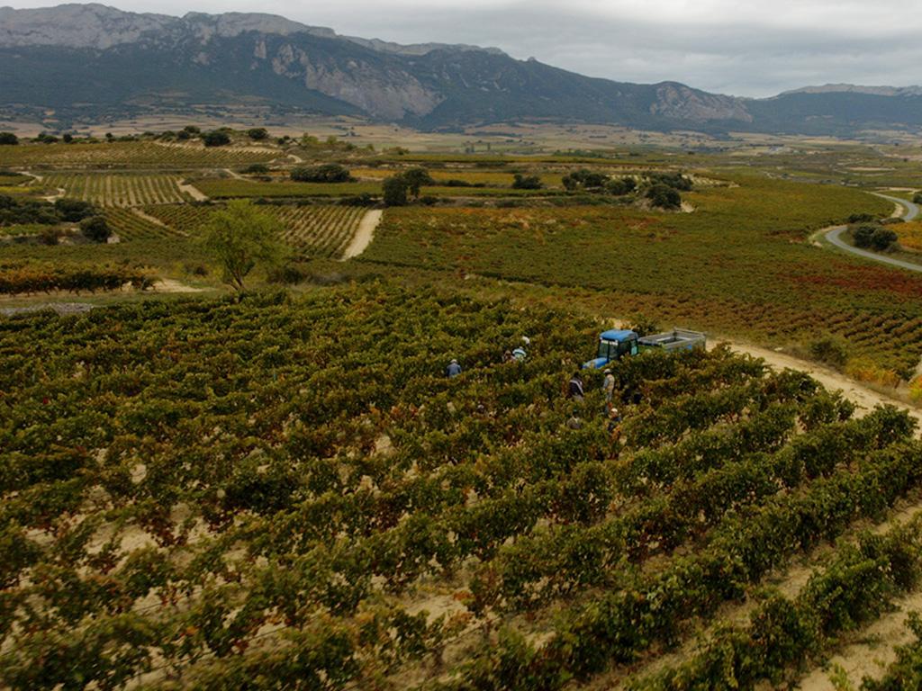 Fotografía aérea Viñedos Labastida
